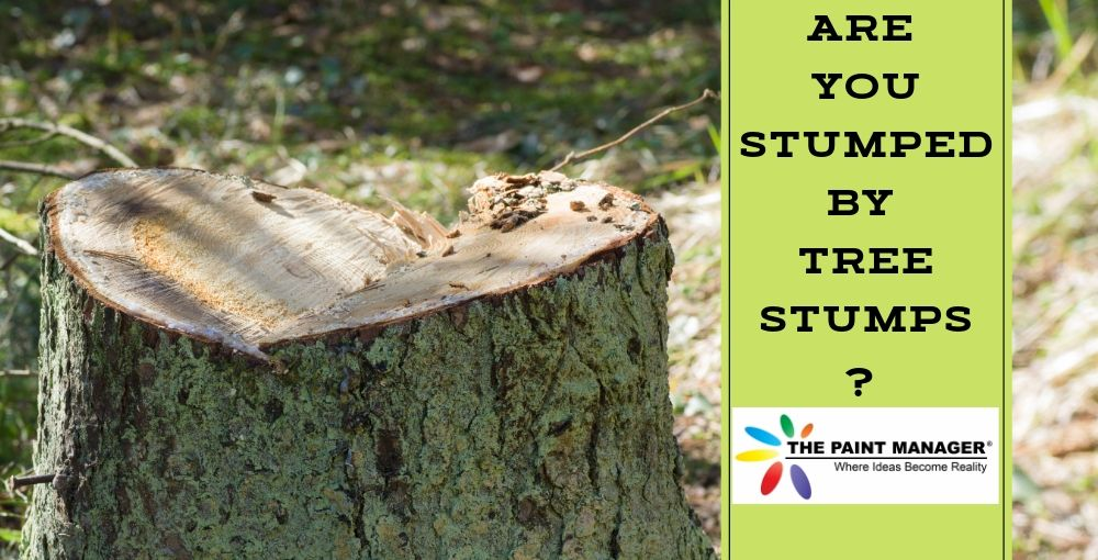 Are You Stumped By Tree Stumps?