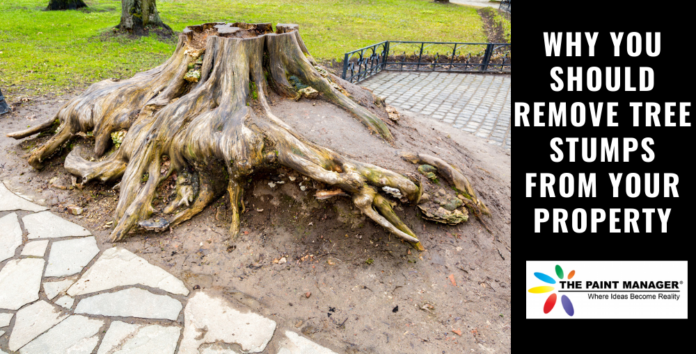 Why You Should Remove Tree Stumps From Your Property